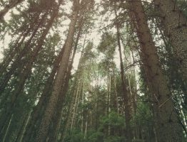 Wald #3